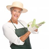 image of pinner  - Full isolated portrait of a senior gardener - JPG