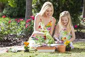 picture of mother daughter  - Woman and girl mother and daughter gardening together planting flowers and tomato plants in the garden - JPG