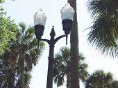 Luzes de rua com palmeiras