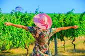 Vineyard Winery Grape Picking. Harvest Farming To Make White Wine. Carefree Blonde Farmer With Open  poster