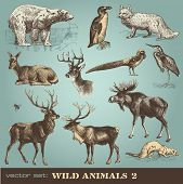 pic of wildebeest  - vector set - JPG