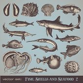 vector set: fish, shells and seafood (set 2) - variety of detailed vintage illustrations