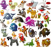 picture of possum  - big vector animal set - JPG