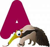 Newest ABC animals: A is for Anteater