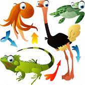 vector animals: octopus, ostrich, turtle, iguana