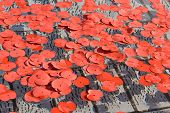Poppy Petals In The Fountain During Silence In The Square Event In Trafalgar Square On Armistice Day