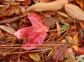 group of leaves with red leaf in middle