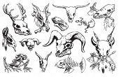Huesos y cráneos de animales