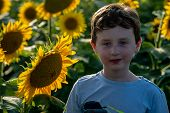 View Of Beauty Joyful Young Boy With Sunflower Enjoying Nature And Laughing On Summer Sunflower Fiel poster
