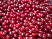 Background Of Red Ripe Cherry. Close Up View On Red Berries. Texture Of Ripe Cherry Piled On The Gro poster