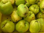 quinces in a pile