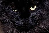 Geërgerd zwarte kat