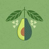 Avocado Illustration. Cut Avocado With Leaves And Flowers On Shabby Background. Symmetrical Flat Com poster