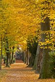 Park in autumn, Karlsruhe in Western Germany