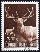Postage stamp Austria 1959 Red Deer, Doe and Fawn