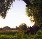 Morning Under The Tree