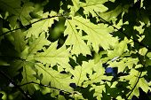 leaves at lithia park in ashland or usa