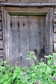 Shabby Door Of Abandoned Barn