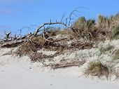 Breakline Of A Dune On The Island Of Sylt