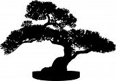 stock photo of bonsai  - Black and White Miniature Bonsai Tree Silhouette - JPG