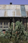 Pear Cactus Tin Roof Building