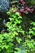 Steinmauer Pflanze