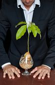 foto of avocado tree  - male in a suit with a new avocado plant thinking about different life forms and legal rights