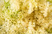 stock photo of meadowsweet  - Creamy white Meadowsweet background  - JPG