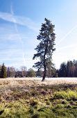 Árvore de paciência