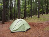 Green Tent In A Forest