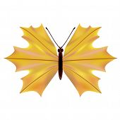 A butterfly with a maple leaf
