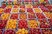 Tomato Vibrant Produce
