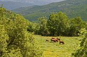 Rustic scenery at Pindos mountains in Europe Greece