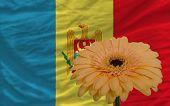Gerbera Flower In Front  National Flag Of Moldova
