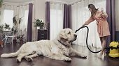 foto of dog-house  - Young woman cleaning big dog - JPG