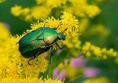 Bug May