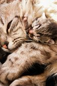 Newborn kitten and her mother hugs with compassion