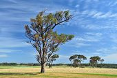An Australian Farm #2