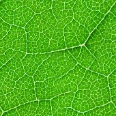 Green Leaf Seamless Texture