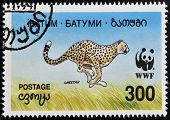 A stamp printed in Batumi shows cheetah