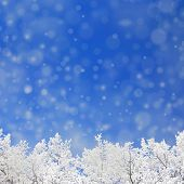 winter background with defocused snowfal and trees