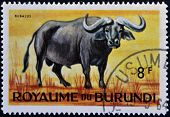 stamp printed in Kingdom of Burundi shows an African animal - Buffalo