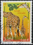 FRANCE - CIRCA 2000: A stamp printed in France shows reticulated Giraffe circa 2000