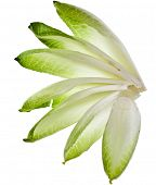 stock photo of chicory  - endive chicory leaves isolated on a white background - JPG