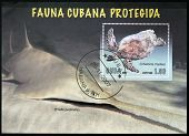 A stamp printed in Cuba shows a sea turtle (Chelonia mydas)
