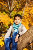 Boy Sit On The Tree