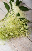 Flower Of Sambucus On Wooden Background.