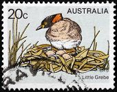 Little Grebe Stamp