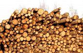 Harvesting Of Wood