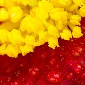 Macro Flower Parts
